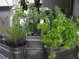growing herbs indoors the old farmer