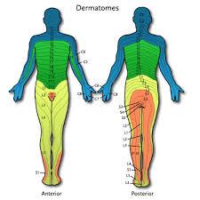 Dermatome Chart Nutritional Health Now