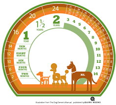 Dog To Human Years Conversion Chart Calculate Your Dogs Age In Human Years