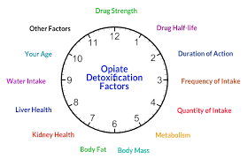 How Long Do Drugs Stay In Your System Chart How Long Do Opiates Opioids Stay In Your System Blood