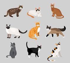 <b>Cat</b> Images | Free Vectors, Stock Photos & PSD