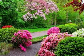 Small Picture Forests Blossoms Trees Spring Pathway Lovely Nature Grass Bushes