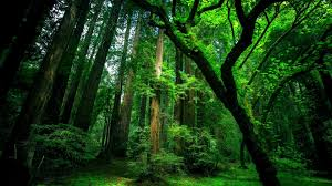 hd wallpapers nature forest. Delighful Nature Original Resolution On Hd Wallpapers Nature Forest R