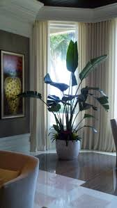cool office plants. Birds Of Paradise Plants - Google Search · Cool Indoor Office