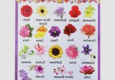 unique photos of all flowers names and pictures names of flowers a z with pictures flowers ideas