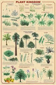 Amazon Com 24x36 Laminated Plant Kingdom Educational