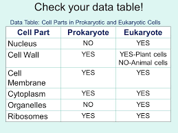 Prokaryotic Versus Eukaryotic Cells Ppt Download