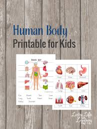 Small Picture Human Body Organs Coloring Pages for Kids