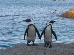 two penguins holding hands. Plain Holding A Pair Of Penguins  And Two Penguins Holding Hands