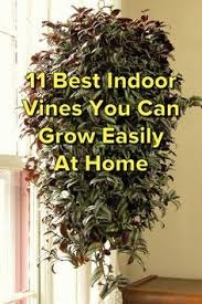 Indoor Climber Plants Are The Right Choice If You Want To Bring Climbing Plants Indoor