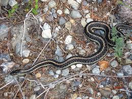 providing a garden snake habitat how to attract snakes in a garden