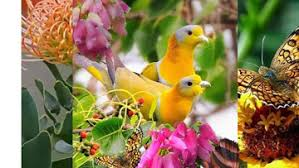 images of flowers and birds.  And Community Cover Photo For Images Of Flowers And Birds L