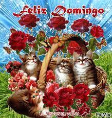 FELIZ DOMINGO - PicMix