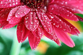 tips for shooting flowers in the rain