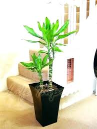 office flower pots. Tall Plant Pot Large Indoor Pots Mesmerizing Photos Beautiful Planters Office Flower O