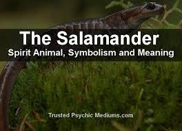 「salamander.」の画像検索結果