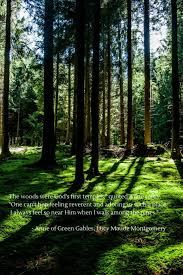 Forest Quotes Extraordinary Forest Quotes Magnificent 48 Inspirational Nature Quotes Suburban