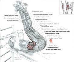 Пресс упражнения и особенности тренировки энциклопедия Подъем ног на скамье для пресса