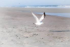 One bird in the beach Photograph by Bonnie Valenzuela