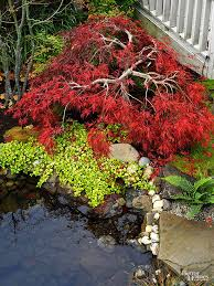Small Picture All About Japanese Maples