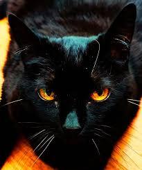 y kitty background black blackcat