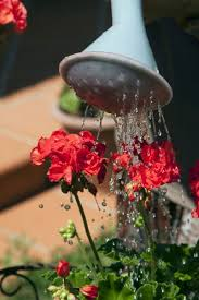 watering outdoor potted plants when