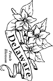 Small Picture 50 State Flowers Coloring Pages for Kids