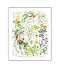 Botanical Chart Print Botanical Chart Plant Illustration Medicinal Plant Print