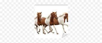horses galloping format definition