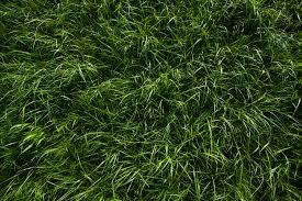 seamless dark grass texture. Textures Tagged With Grass Wild - HD Wallpapers Seamless Dark Texture