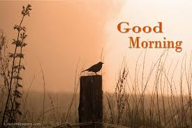 Good Morning Birds Wishes Wallpapers ...