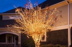 wrap an outdoor tree with lights plus more yard decorating ideas