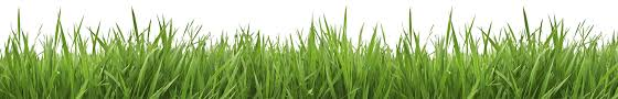 Free Blades Of Grass Png, Download Free Clip Art, Free Clip Art on ...