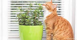 is the mint plant poisonous to cats