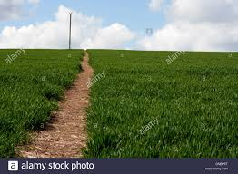 tall green grass field. Landscape Of Field, Footpath Leading To Horizon, Tall Green Grass, Blue Sky, Grass Field