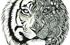 Tiger Color Page Two Tigers Ready For Hunting Coloring Page Detroit
