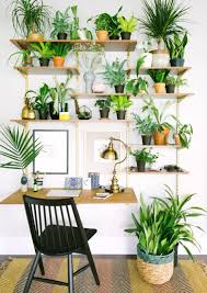 ... Wall Shelves For Plants We Have Welcomed Two New Species To Our Family  This Month A ...