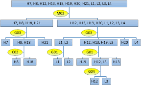 H12 Tolerance Chart Pdf The Flow Chart For Identifying 12 Prevailing Tea Cultivars