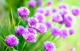 Free Floral Backgrounds Free Floral Backgrounds 20 Blooming Examples Stockvault Net Blog