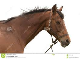 horse face side. Simple Horse Brown Horse Head And Horse Face Side T