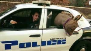Animal Cop Cop Takes Donkey For A Ride Along