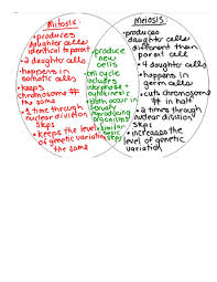 Venn Diagram Comparing Meiosis And Mitosis Mitosis And Meiosis Venn Diagram Biology Lessons Science