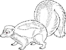 Small Picture Skunk Free Images at Clkercom vector clip art online royalty