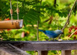 Image result for feed birds