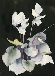 white cyclamen on black background watercolor ink