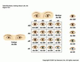 Eye Color Genetics Chart Eyecolor Eye Color Chart Color Eye Color