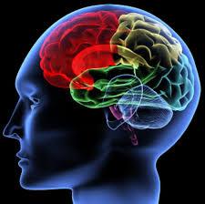 Bilderesultat for el cerebro y el idioma