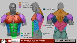 Third, the muscles of the torso do not move just the torso (vertebral column and rib cage) but also the shoulder girdle, which includes the scapula bones and clavicles, as well as the upper arms. How To Draw Man Muscles Body Anatomy Drawing And Digital Painting Tutorials Online
