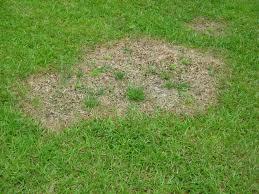 Identifying Large Patch Disease On North Carolina Warm Season