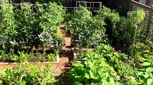 How to Grow a lot of Food in a Small Garden - 9 EZ tips - YouTube